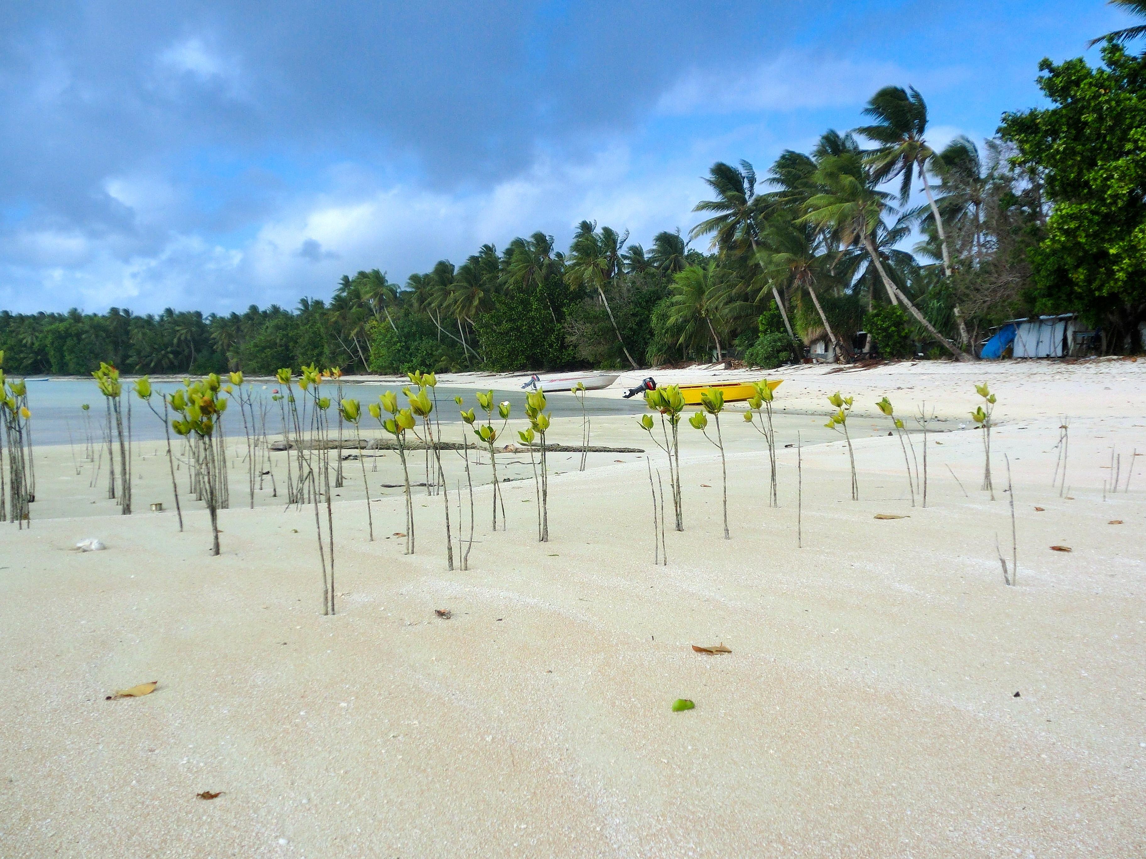Shifting Tuvalu Civil Society to the Virtual World